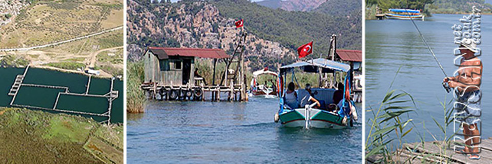 DALYAN Daily fishing